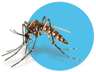 needknow-mosquito2.png
